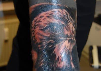Adler (1)