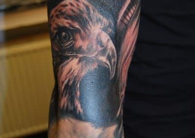 Adler (2)