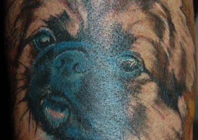 Hunde Portrait